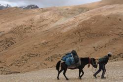 Ladakh2019 horseman en action