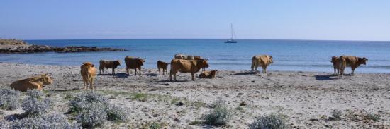 Entre Macinaggio et Barcaggio