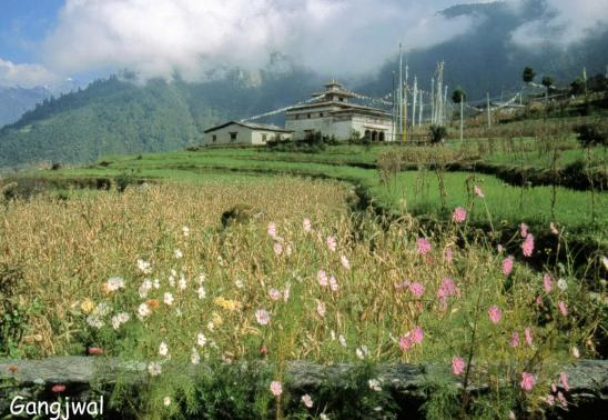 La gompa de Gangjwal