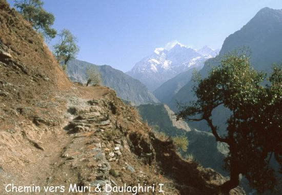 Le Dhaulagiri I vu du début de la vallée entre Muri et Boghara
