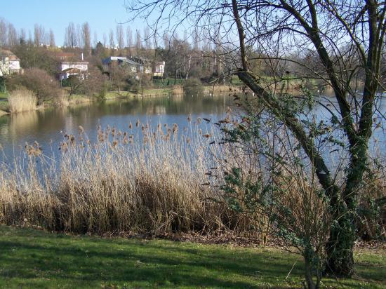 Torcy (étangs du Maubuée)