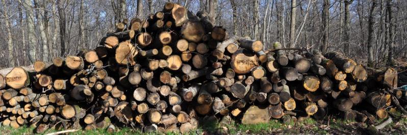 Stères de bois dans la forêt Notre-Dame