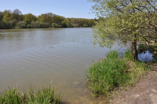 Les étangs de la Tour