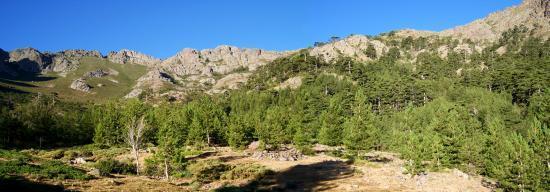 La forêt de Tartagine-Mélaja