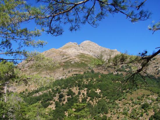 Le San Parteo depuis la forêt de Tartagine-Mélaja