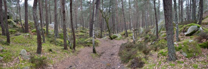 La forêt à proximité de Barbizon
