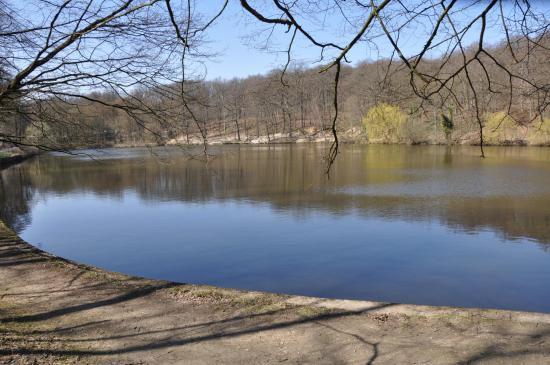 Les étangs de Meudon