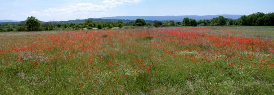 La plaine du Luberon
