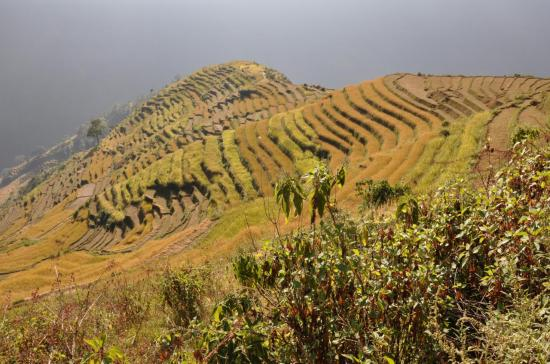 Campagne entre Bulung et Jagat