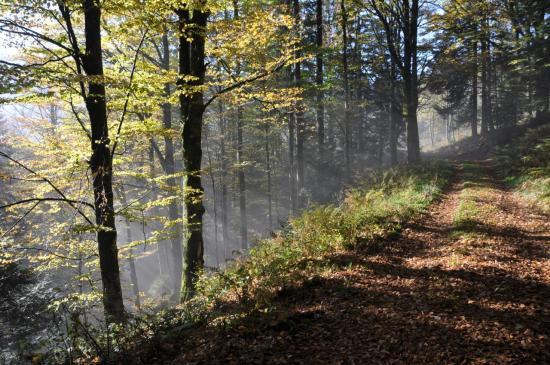 La forêt d'automne entre les cols du Calvaire et du Bonhomme