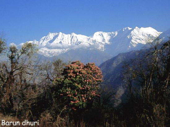 Le Gurja himal vu depuis la crête de Barun dhuri