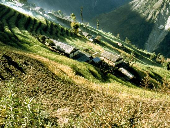 Les terrasses de Chomrong