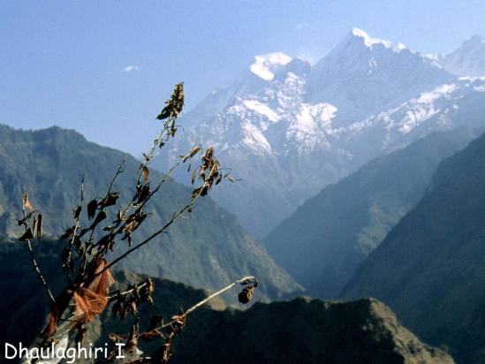 Le Dhaulagiri I vu depuis l'entrée de la vallée qui conduit à Boghara