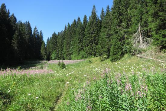 Au coeur de la forêt du Risoux