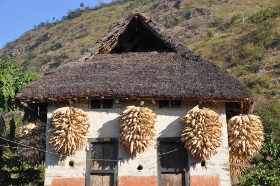 Séchage du maïs sur une maison dans la vallée de la Sun kosi