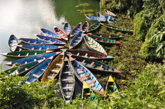 Les barques de Phewa Tal (Pokhara)