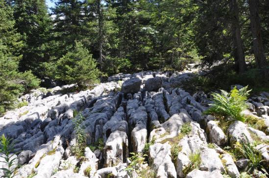 Les lapiaz du canyon des Erges