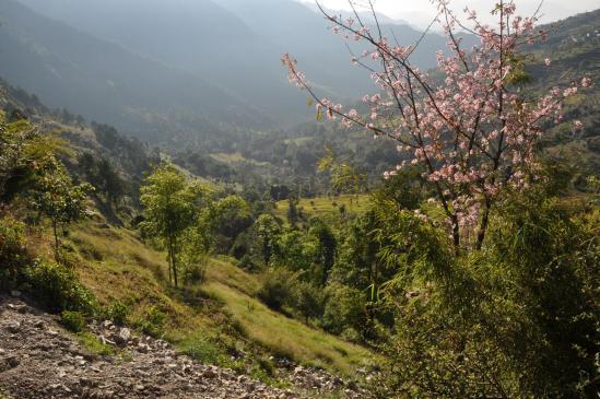 La campagne du piémont himalayen du côté de Doremba