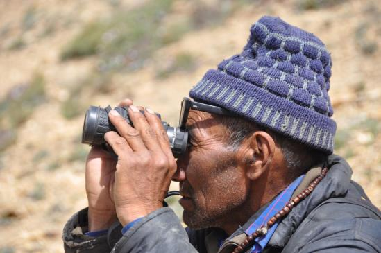 Berger qui surveille ses troupeaux de yacks dans les alpages du Rasi La