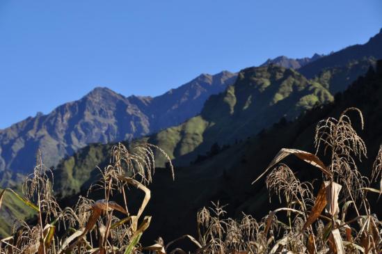 Maïs à Jarlung (Rukum)