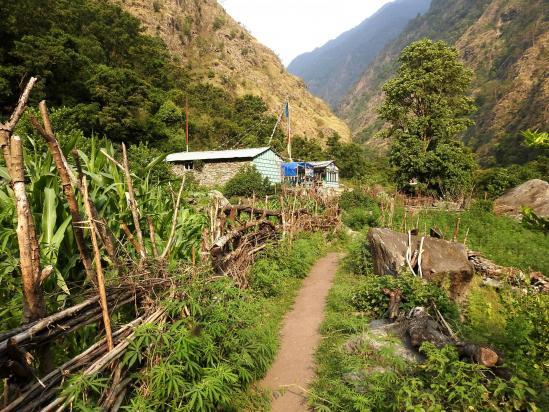 Le trek est à peine commencé que l'on rencontre déjà les premiers lodges (Tiwiri)