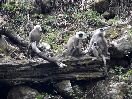 A Chunama, les singes font le spectacle...