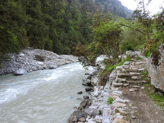 Le long de la Langtang khola du côté de Lama hotel