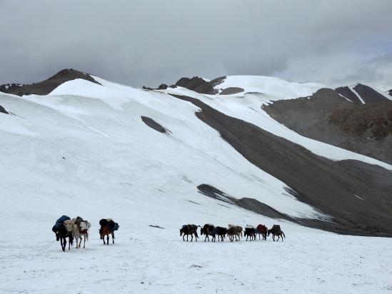 La caravane de mules s'apprête à nous dépasser à l'approche du Lasermo La
