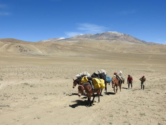 La caravane de mules dans l'ascension du Norbu La