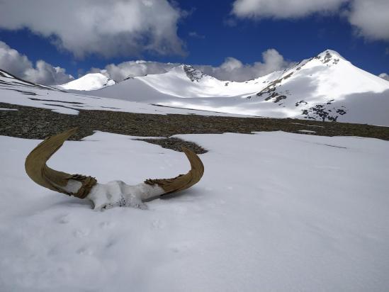 Au niveau du col N du Tsomo Riri view peak (photo Rinchen Norbu)