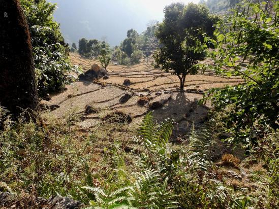 Les rizières de Lumlungma