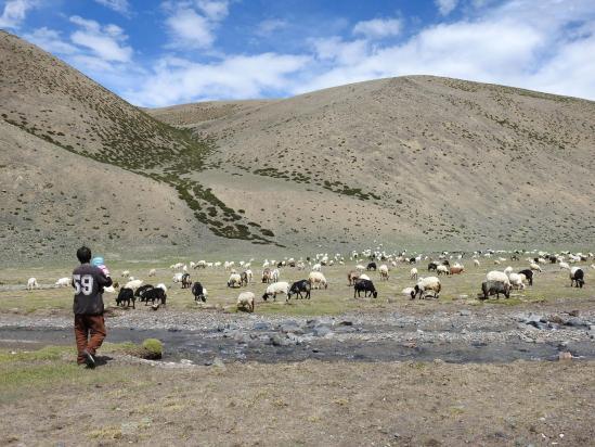 Un berger de Nyoma en estive avec son troupeau (et toute sa famille...) dans la vallée de la Changlung togpo