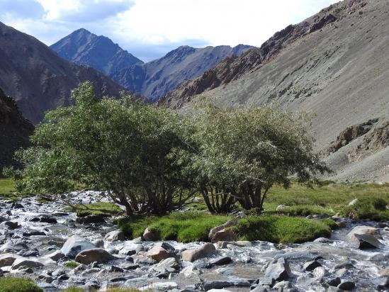 Changlung togpo : les deux premiers arbres qui annoncent une forêt plutôt dense en contrebas...