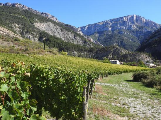 Traversée du vignoble au départ de Laval-d'Aix (la montagne du Glandasse à l'horizon)