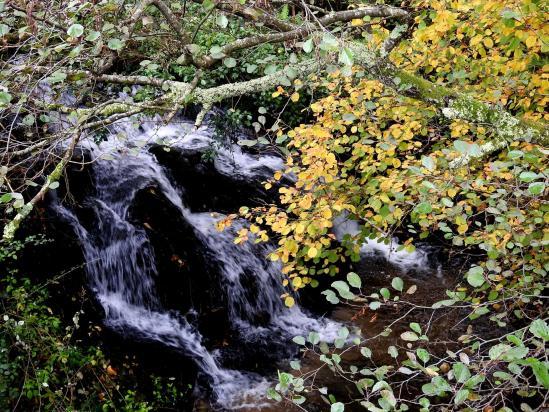 Le ruisseau de Boursout