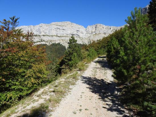 Sur le chemin forestier de Lalier face aux falaises E du plateau d'Ambel