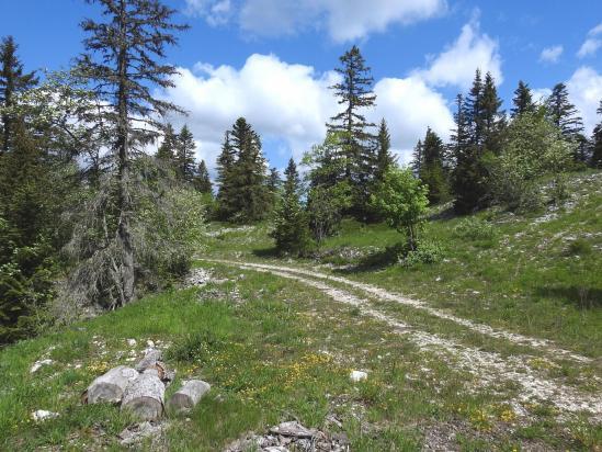 Sur la route forestière du Petit Bois