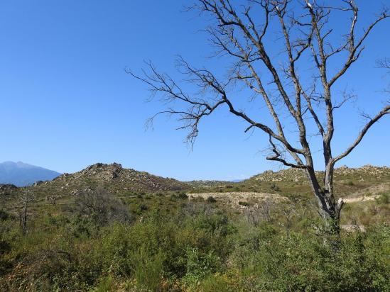 Sur le plateau granitique du Serrat dels Mallols