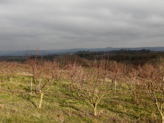 Les vergers sur le plateau entre Les Planards et La Mistrale