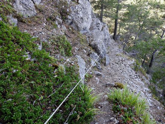 Entre Tarsimoure et le col de la Caille, descente dure dans le Bois Mol...