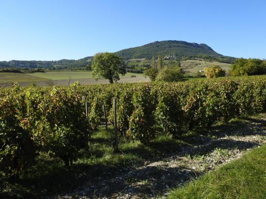 Depuis le vignoble du domaine Peylong, vue sur Saint-Pancrace