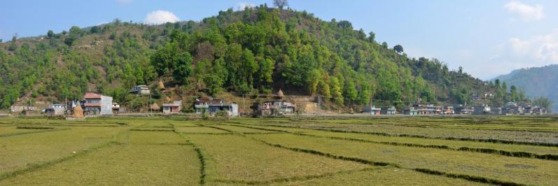 Les rizières du côté de Sabi
