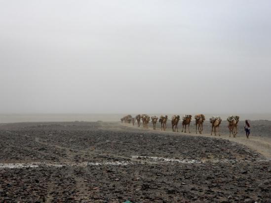 Une caravane provenant du site d'extraction du sel arrive à Hamed Ila
