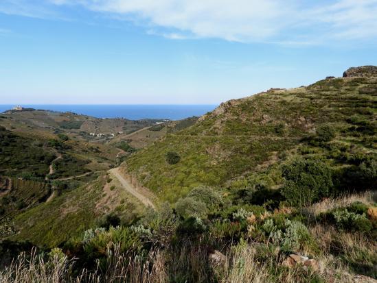 A l'approche de Collioure, les vignes en terrasse du vallon de la Dui