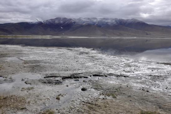 Au bord du Tsokar, lac salé