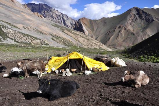 Les nomades de Shade en estive sous le Rotang La (le Lar La est en arrière-plan)