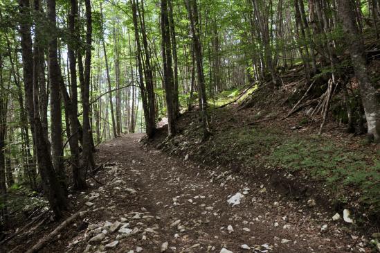 Montée en forêt vers le hameau isolé de la Goulandiere
