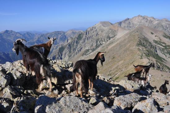 Depuis le sommet du Monte Cardo débute la crête qui le relie au Monte Rotondo