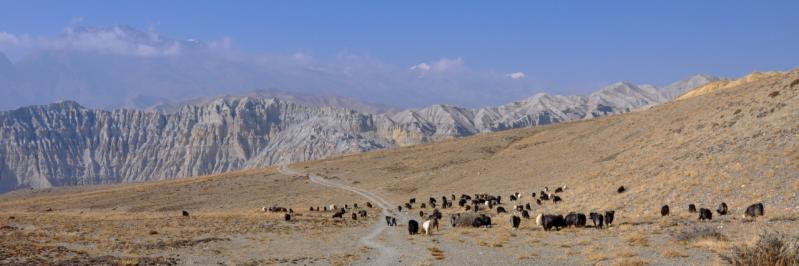 Sur le plateau de Yara