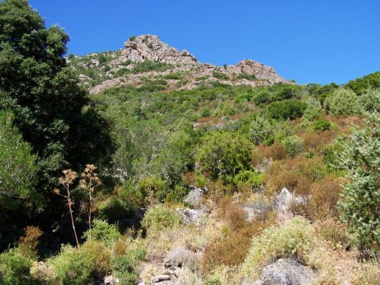 Dans la montée à la bergerie de Bradani depuis Tizzarella
